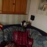 Kätzin Milka (jetzt Melody) im neuen Zuhause / © 2013 Privat