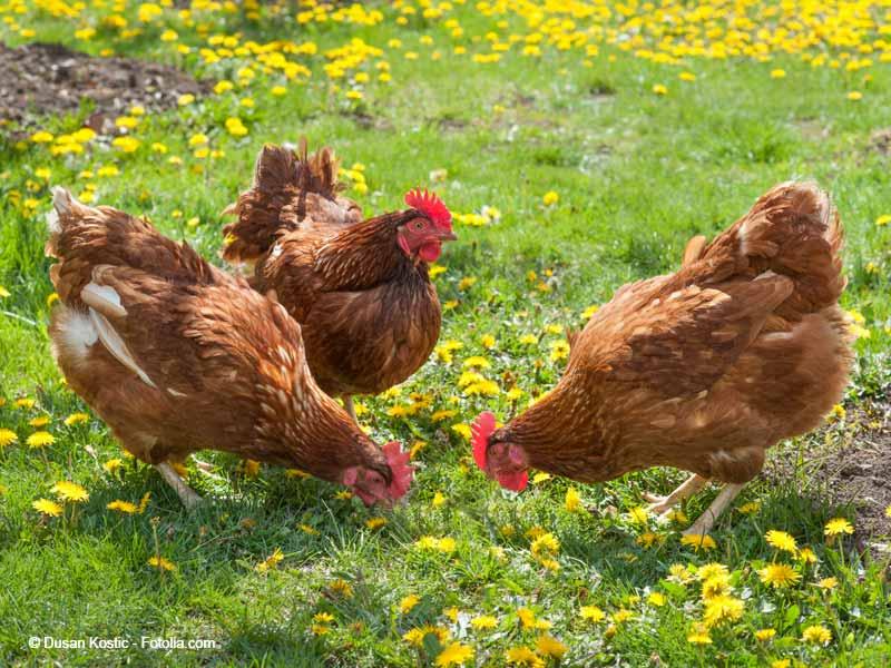 Hilferuf Zur Unterbringung Verschiedener Tiere Arche Kanaum Stiftung F 252 R Tierschutz