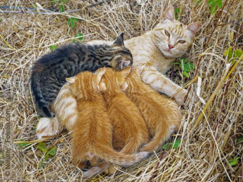 Beste Weibliche Katze Anatomie Diagramm Fotos - Anatomie Von ...