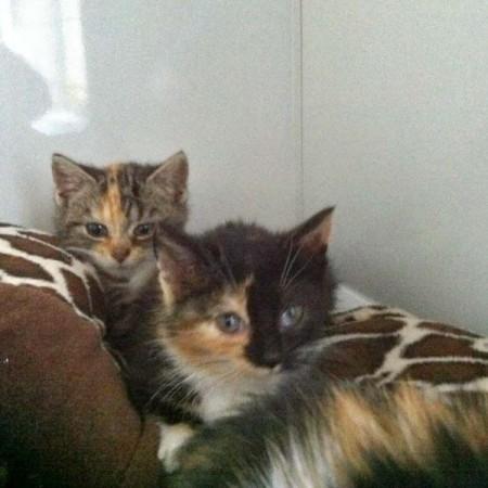 Kätzinnen Sissy (hinten) und Darlin im neuen Zuhause / © 2013 Privat