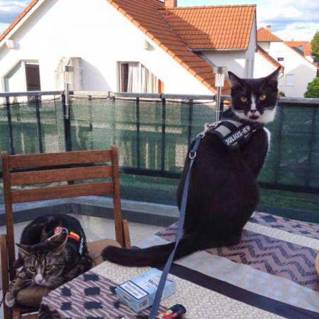 Genießen ihren Balkon: Obelix (l.) mit Kumpel Odin im neuen Zuhause / © 24.05.'14 Privat