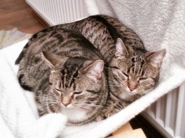 Weil es nur richtig gemütlich ist, wenn man sich gemeinsam in die kleinste Hängematte quetscht ... / © 2013 Arche KaNaum (DN)