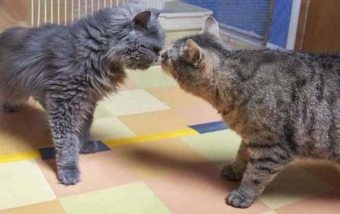 Weil nur andere Katzen so küssen können ... / © 2013 Arche KaNaum (DN)