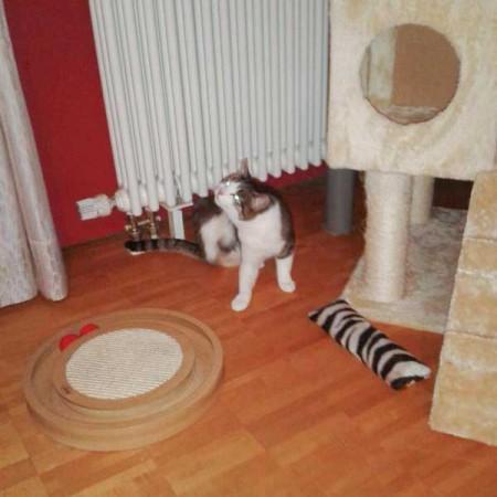 Kätzin Rosinchen im neuen Zuhause / © 2014 Privat