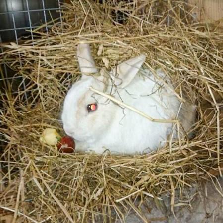 Kaninchen Flip im neuen Zuhause / © 2015 Privat
