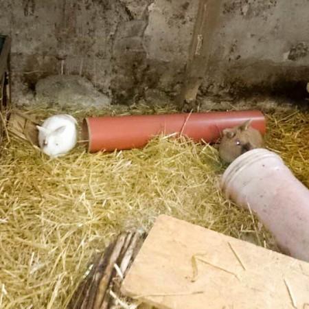 Kaninchen Flip mit Kumpel im neuen Zuhause / © 2015 Privat