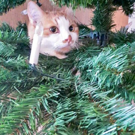 Kater Füchschen sendet liebe Weihnachtsgrüße / © 24.12. '15 Privat