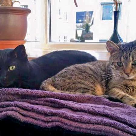 Kätzin Lucy (l.) mit Freundin im neuen Zuhause / © 15.01.'16 Privat