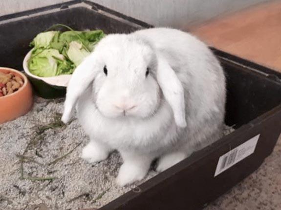 Kaninchen Felix sucht ein neues Zuhause / © 2019 Privat