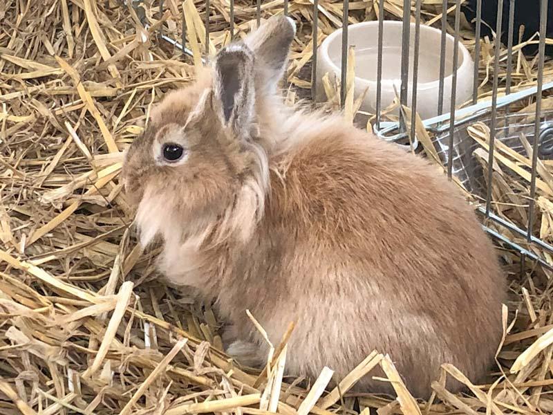 Kaninchenhäsin Bunny / © 2019 Arche KaNaum (AE)